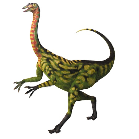 Deincheirus on White - Deincheirus was a large theropod carnivorous dinosaur of the Cretaceous Age