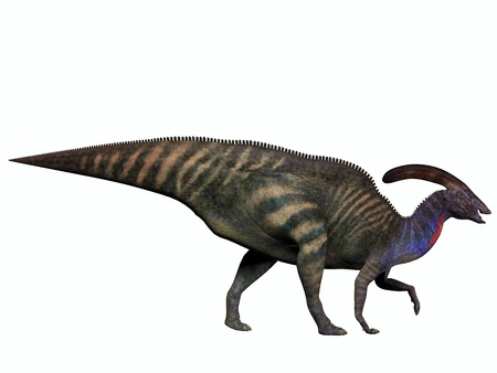 Parasaurolophus on White - Parasaurolophus was a herbivorous dinosaur in the Cretaceous which walked as a biped and also a quadruped  Banco de Imagens