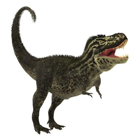 T-Rex on White - The large predatory beast of the Cretaceous era called Tyrannosaurus Rex Фото со стока - 21763332