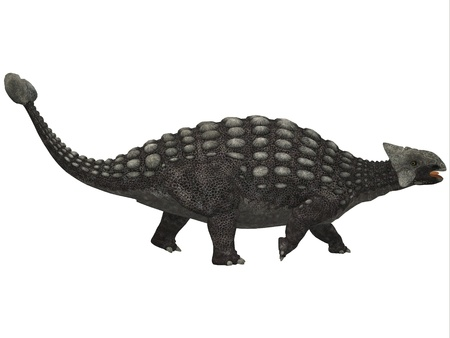 behemoth: Ankylosaurus on White - A huge armored dinosaur, Ankylosaurus was a herbivore from the Cretaceous Era