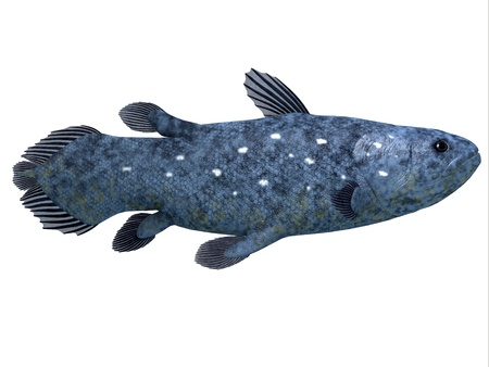 Coelacanth Fish on White - The Coelacanth fish was believed to be extinct but were discovered in 1938 to still be living  Archivio Fotografico