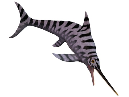 Eurhinosaurus Ichthyosaur on White - Eurhinosaurus is an extinct genus of Ichthyosaur from the Early Jurassic of Europe