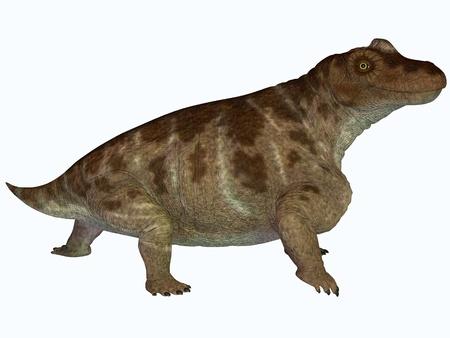 semi aquatic: Keratocephalus on White - Keratocephalus was a semi-aquatic herbivore dinosaur that lived in the Permian Age of Africa