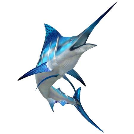oceano: Marlin Fish on White - The Blue Marlin es un pez de gran juego popular para los pescadores y habita los océanos en todo el mundo Foto de archivo