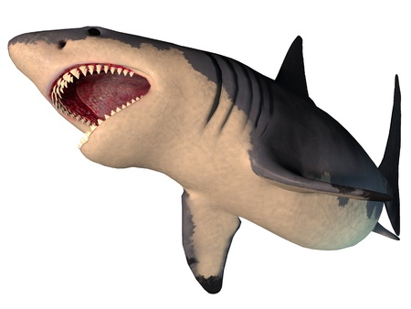 Megalodon Shark on White - The Megalodon is an extinct megatoothed shark that existed in prehistic times, from the Oligocene to the Pleistocene Epochs