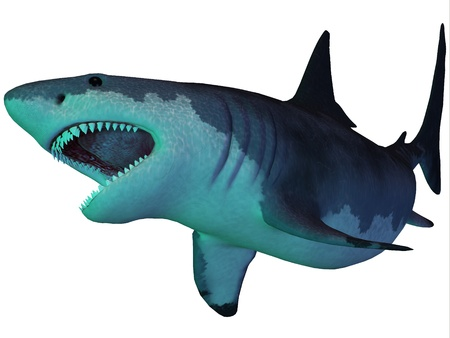 Megalodon Shark Underwater - The Megalodon is an extinct megatoothed shark that existed in prehistoric times, from the Oligocene to the Pleistocene Epochs  photo