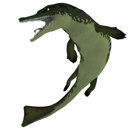 Metriorhynchus on White - Metriorhynchus was a marine reptile similar to our present day crocodile and lived in the Jurassic Period  Stock Photo - 21763371