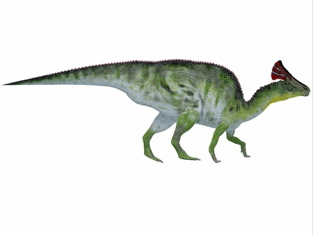 herbivorous: Olorotitan on White - Olorotitan was a duckbilled dinosaur with a colorful fan-shaped crest on its head and existed in the Cretaceous Period