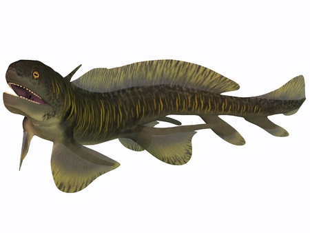 prehistoric animals: Orthacanthus on White - Orthacanthus was a Devonian freshwater shark that thrived in Carboniferous swamps and bayous in Europe and North America