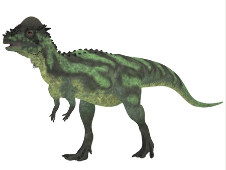 existed: Pachycephalosaurus on White - Pachycephalosaurus dinosaur was a bipedal omnivore with an extremely thick skull roof and existed in the Cretaceous Period