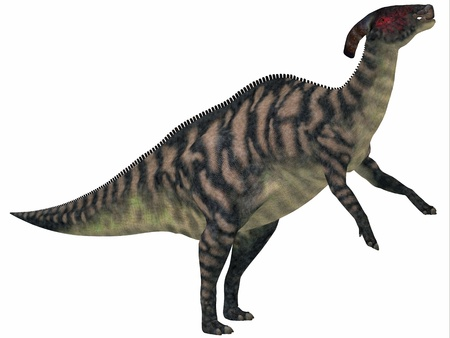 bipedal: Parasaurolophus Striped on White - Parasaurolophus was a herbivorous hadrasaur that lived during the Cretaceous Period and was bipedal and a quadruped