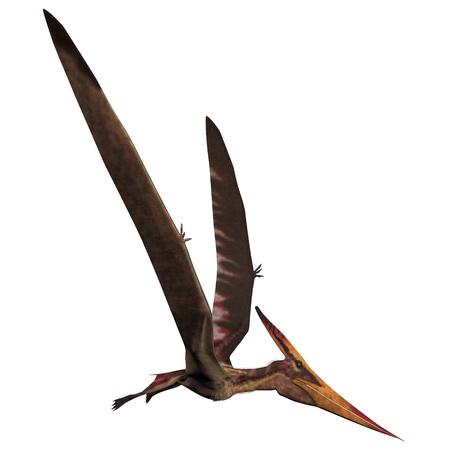 白 - プテラノドン プテラノドンは爬虫類の鳥からの後期白亜紀の北アメリカ 写真素材