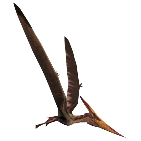 pterodactyl: Pteranodon on White - Pteranodon was a reptilian bird from the Late Cretaceous of North America  Stock Photo