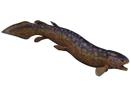 carboniferous: Rhizodus Fish on White - Rhizodus is an extinct group of Carboniferous predatory lobe-finned fishes that lived in freshwater