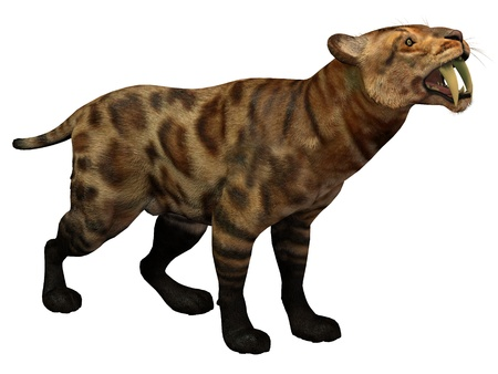 critters: Smilodon Cat on White - Smilodon Cat lived in North America from the Eocene to Pleistocene Period and preyed on many large animals  Stock Photo