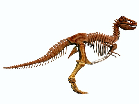 intimidating: T-Rex Skeleton - Tyrannosaurus Rex lived in North America in the Cretaceous Period and was an intimidating predator  Stock Photo