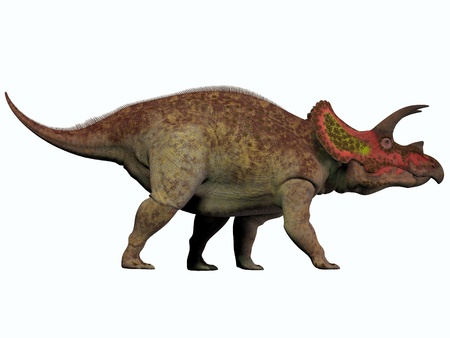 Triceratops on White - Triceratops is a genus of herbivorous dinosaur that lived in North America in the Cretaceous Period
