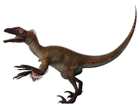 dinosaur teeth: Utahraptor on White - Utahraptor was first found Utah and was a carnivore that hunted in packs in the Cretaceous Period