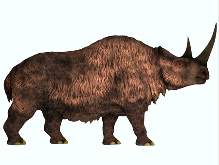 woolly: Woolly Rhino on White - Woolly Rhinoceros is an extinct mammal that lived during the Pleistocene Period in Europe and Asia