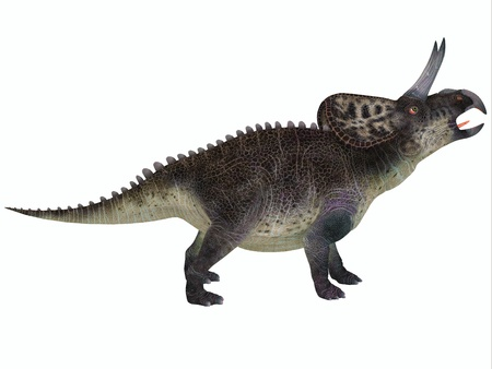 behemoth: Zuniceratops on White - Zuniceratops was a genus of Ceratopsian dinosaur that was a herbivore and lived in North America in the Cretaceous Period  Stock Photo