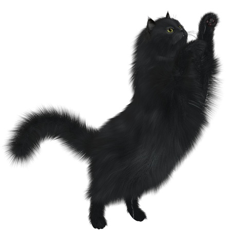 Black Cat - A black cat is a feline with black coloring and may not be any specific breed  Stock Photo