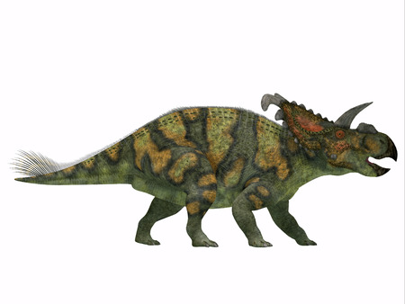 mesozoic: Albertaceratops on White - Albertaceratops was a member of ceratopsian dinosaur from the Upper Cretaceous Era