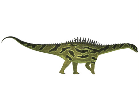 Augustinia on White - Agustinia is a sauropod from the Early Cretaceous Period of South America  Banco de Imagens