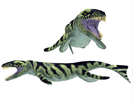 nicknamed: Dakosaurus on White - Dakosaurus was discovered in Argentina  It is unique among the family of marine crocodylians with its short snout  which is why it was nicknamed  Godzilla    It lived during the Late Jurassic - Early Cretaceous