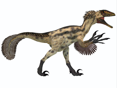 prehistoric animals: Deinonychus on White - Deinonychus is a carnivorous dinosaur from the early Cretaceous Period  Stock Photo