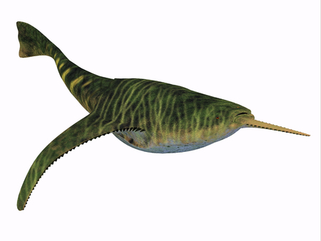 prehistoric animals: Doryaspis Fish on White - Doryaspis is an extinct genus of primitive jawless fish that lived in the Devonian Period