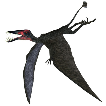 pterodactyl: Dorygnathus Pterosaur on White - Dorygnathus was a genus of pterosaur that lived in Europe, Germany in the Jurassic Period