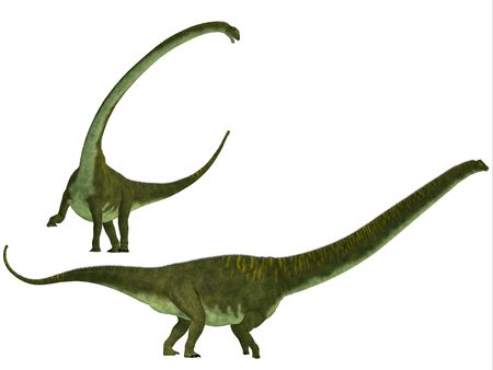 sauropod: Mamenchisaurus hochuanensis - Mamenchisaurus era un dinosaurio saur�podo herb�voro de finales del per�odo Jur�sico de China, Foto de archivo