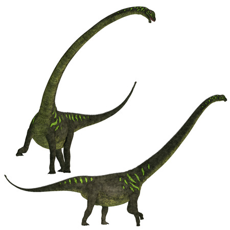 herbivorous: Mamenchisaurus youngi - Mamenchisaurus was a plant-eating sauropod dinosaur from the late Jurassic Period of China  Stock Photo