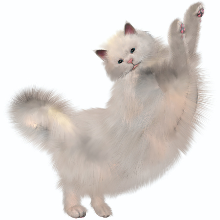 molly: Oriental Longhairs feature a long tubular, Siamese-style body  known in the cat fancy as oriental type , but with a longer coat than the short-haired Siamese      apricot , tortoiseshell, smoke  silver undercoat , shaded or tipped, tabby or white  Stock Photo
