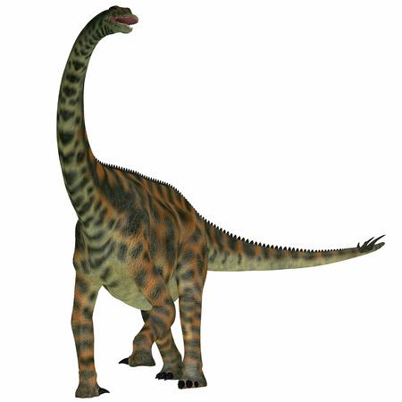 sauropod: Spinophorosaurus en el blanco - Spinophorosaurus es un dinosaurio saur�podo de N�ger que vivi� en el Per�odo Jur�sico Foto de archivo