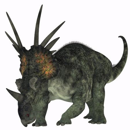 Styracosaurus on White - Styracosaurus was a herbivorous ceratopsian dinosaur from the Late Cretaceous Period