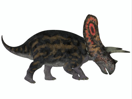 Torosaurus Profile - Torosaurus had the largest skulls of any known land animal  It was herbivorous dinosaur from the Late Cretaceous period  photo