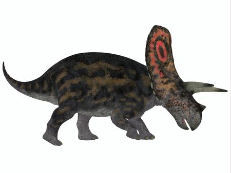 had: Torosaurus Profile - Torosaurus had the largest skulls of any known land animal  It was herbivorous dinosaur from the Late Cretaceous period  Stock Photo