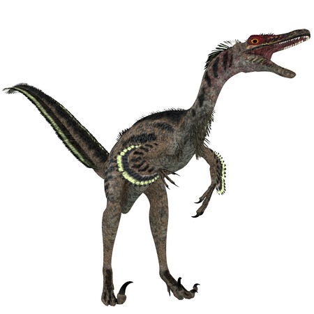 extinction: Velociraptor on White - Velociraptor is a theropod dinosaur that existed in the late Cretaceous Period