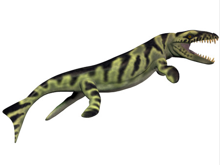 nicknamed: Dakosaurus Profile - Dakosaurus was discovered in Argentina  It is unique among the family of marine crocodylians with its short snout  which is why it was nicknamed  Godzilla    It lived during the Late Jurassic - Early Cretaceous