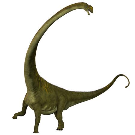 Mamenchisaurus hochuanensis on White - Mamenchisaurus hochuanensis on White - Mamenchisaurus was a plant-eating sauropod dinosaur from the late Jurassic Period of China Imagens - 23122737