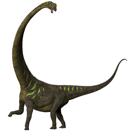 sauropod: Mamenchisaurus youngi en blanco - Mamenchisaurus era un dinosaurio saur�podo herb�voro de finales del per�odo Jur�sico de China, Foto de archivo