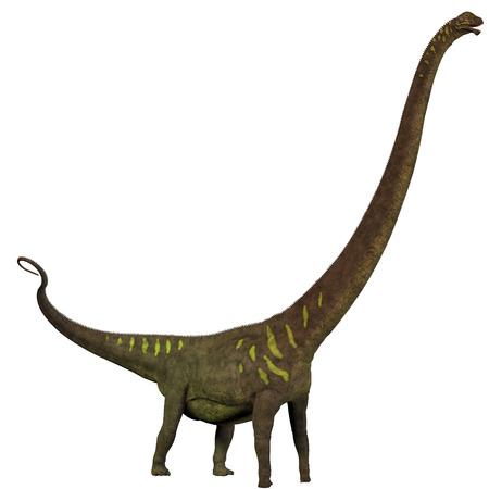 sauropod: Mamenchisaurus youngi Perfil - Mamenchisaurus era un dinosaurio saur�podo herb�voro de finales del per�odo Jur�sico de China, Foto de archivo
