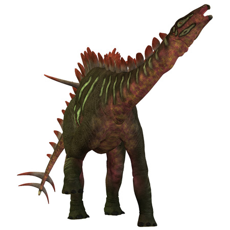 spines: Miragaia over White - Miragaia is a genus of stegosaurid dinosaur that lived in the Upper Jurassic Era  Stock Photo