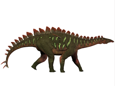Miragaia Profile - Miragaia is a genus of stegosaurid dinosaur that lived in the Upper Jurassic Era