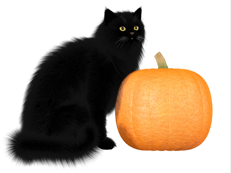 Black Cat and Pumpkin - The black cat and pumpkins are a symbol of autumn seasonal Halloween festivities  Stock Photo - 23123050
