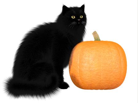Black Cat and Pumpkin - The black cat and pumpkins are a symbol of autumn seasonal Halloween festivities Stock Photo - 23123050