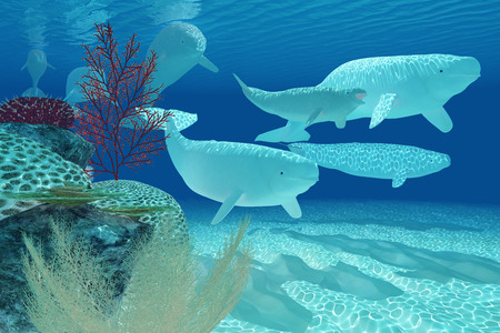 cetacean: Beluga Whales - A pod of Beluga whales swim past by a colorful reef environment