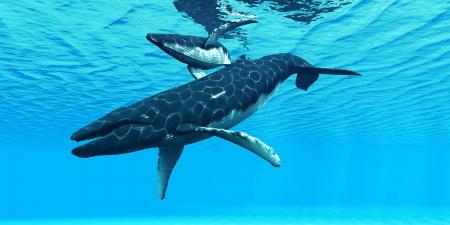 Humpback Mother and Calf - een bultrug moeder zwemt met haar kalf op hun trekroute door oceaanwater