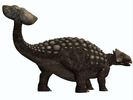 herbivore: Ankylosaurus on White - Ankylosaurus was a heavily armored herbivore dinosaur from the Cretaceous Period